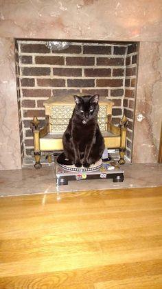 Our friends got us a kitty DJ scratch pad. Maynard had other ideas.
