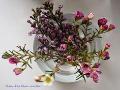 Kukkia, flowers, blommor