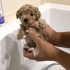 wash time
