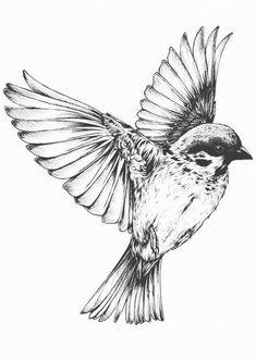 Kunstwerk, das wir lieben: Drucke durch Teagan White - Vogel im Flug Mehr Imágenes efectivas que le proporcionamos sobre healthy recipes Una imagen de alt - Bird Drawings, Tattoo Drawings, Trendy Tattoos, Cool Tattoos, Unique Tattoos, Sparrow Drawing, Sparrow Art, Sparrow Tattoo Design, Fly Drawing