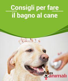 Cartello attenti al cane dogs pinterest dog - Fare il bagno al cane dopo mangiato ...
