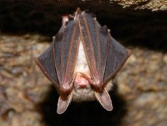 4 Ways to Attract Bats to Your Farm for Natural Pest Control - Hobby Farms