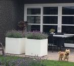 Witte (RAL9010) polyester bloembakken gevuld met Lavendel. Via tuinvoordeel.eu