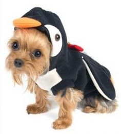 A puppy dressed as a penguin... two of my most favorite things! Nothing could be better than this.