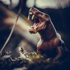 #dinosaur #dinosaurs #jurassicpark #jurassicworld #dino #trex #art #paleontology #jurassic #dinosaursofinstagram #prehistoric #tyrannosaurusrex #jurassicworldfallenkingdom #velociraptor #paleoart #dinosaurios #fossil #jurassicworldevolution #nature #raptor #animals #tyrannosaurus #drawing #cretaceous #triceratops #toys #toyphotography #spinosaurus #reptiles #bhfyp Dino Trex, Jurassic World Fallen Kingdom, Spinosaurus, Tyrannosaurus Rex, Toys Photography, Jurassic Park, Prehistoric, Reptiles, Fossil