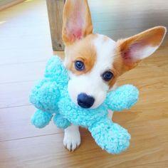♡ Mamamiamakeup's dog ken ♡