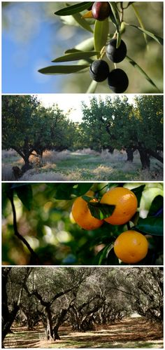"""""""Glamping"""" (glamorous camping) at Chaffin Orchards sustainable farm in Northern California"""