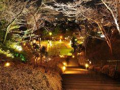 東山花灯路 高台寺の夜間拝観