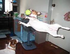 Volles Engagement beim Flyball üben.