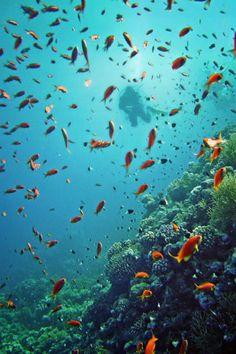 紅海(the Red Sea)