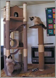 diy cat tree | Here are some examples of kitty jungle gyms we designed and built  | followpics.co #catsdiytree