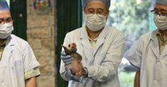 Filhote de panda gigante é mostrada por cuidadores no Chimelong Safari Park, em Guangzhou, sul da China. O animal nasceu em 9 de agosto, e é o quinto a nascer no parque nos últimos três anos