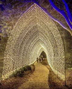 Floriade NightFest. Canberra. Australia. Whatever this is this is awesome, I would love to see this