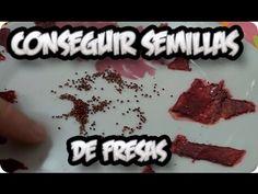 Como+Conseguir+Semillas+De+Fresa