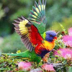 Un arcobaleno vivente!