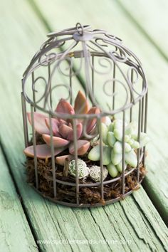 These succulents look adorable in this little birdcage!