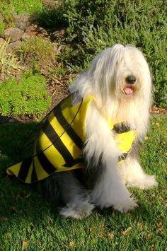 Old English Sheepdog Dog Bumblebee Halloween Costume