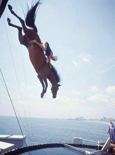 I would definitely want to see this if I'm ever in Atlantic City. Diving horses making a comeback in Atlantic City, N., at the Steel Pier? All The Pretty Horses, Beautiful Horses, Animals Beautiful, Horse Love, Horse Girl, Sonora Webster, Horse Diving, Trick Riding, Horses