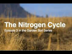 Nitrogen is one of the most important elements for you and your plants.  Although its in abundance making it available to you can be simple and organically done!  Check out the Third Episode in the Garden Soil Series: The Nitrogen Cycle
