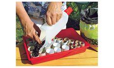 Lavendel vermehren Garden Planning, Nutella, Home And Family, Home And Garden, Gardening, Crayons, Erika, Vip, Warm
