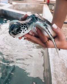 You bought the turtle so you can have more fun with family members and friends. Baby Animals Pictures, Cute Animal Pictures, Animals And Pets, Baby Farm Animals, Baby Cows, Wild Animals, Cute Little Animals, Cute Funny Animals, Funny Babies