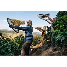 My exhibition at Flo Peters Gallery in Hamburg, Germany opens September 4th, and will be on view until October 3rd. It features images from my latest book, From These Hands: A Journey Along the Coffee Trail.  The gallery is located at Pumpen 8, 20095 Hamburg, Germany.  #FloPetersGallery https://www.facebook.com/pages/Flo-Peters-Gallery/160868203930031