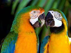 A beleza das aves do Amazonas