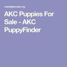 AKC Puppies For Sale - AKC PuppyFinder