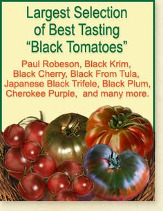 Largest Selection of Best Tasting Black Tomatoes