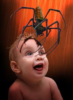 Arañas (2009) pablouria.com