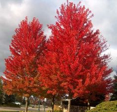 30 Best Trees To Please Images Trees Shrubs Gardening Gardens