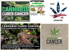 cannabes cancer cure