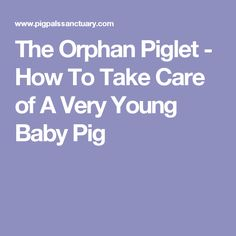 The Orphan Piglet - How To Take Care of A Very Young Baby Pig Pig Facts, Raising Farm Animals, Young Baby, Baby Pigs, Orphan, Pet Health, Livestock, Cattle, Farming