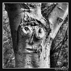 Tree spirit Enchanted Tree, Tree People, Spooky Trees, Tree Faces, Driftwood Sculpture, Natural Face, Animals Images, Optical Illusions, Sculptures