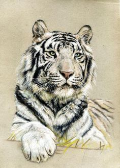 Shere Khan by hator #Tiger #Tigers #AnimalArt #Art #Drawing