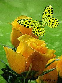 Mariposa y flores amarillas