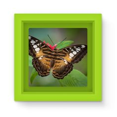 Brown White Butterfly Magnet Frame