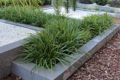 Best Plants For A Drought Tolerant Garden - Useful Garden Ideas and Tips Home And Garden, Plants, Garden Architecture, Front Yard Landscaping, Urban Garden, Back Gardens, Modern Garden, Modern Garden Design, Backyard