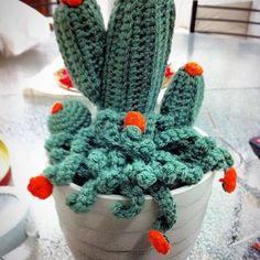 #Cactus consegnato per #Natale! Quanto ci piacciono le nostre #succulente !! Il vantaggio di averne una è che non seccherà mai. Per una come me che non ha il pollice verde è perfetta👌🏻#misspumpkin #crochet #fattoamano #homedecor #handmade #cactuscrochet #piantagrassa
