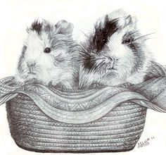 guinea pig sketch - snickers and reese's