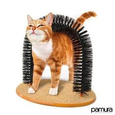 U Cat Arch Self Groomer Massager Groom Toy Dog Brushes Pet Puppy Cat Scratcher Toys Fur Grooming Cat Toy Brush Controls Shedding with Scratch Pad and Catnip Interactive Kitten Toys Raising Kittens, Cats And Kittens, Cat Dog, Pet Puppy, Kitten Toys, Kitten Care, Cat Scratcher, Cat Grooming, Animals And Pets