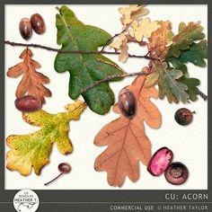 Acorn | Design by Heather T.