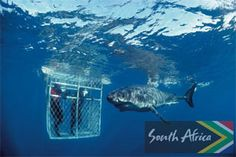 Swim with sharks in South Africa