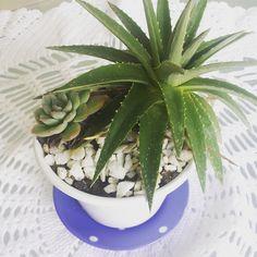 Muito amor  Sábado é dia de dar um carinho a mais na casa. E nada melhor que um verdinho para alegrar o ambiente. #cactus #suculents #succulentlove  #succulentgiftidea #cactuslover #cactuslove #cacti #croche #casadamhilka  #succulove