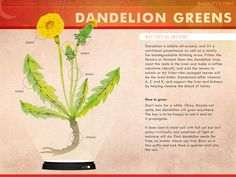 Dark Rye: Vital Veggies: Dandelion Greens