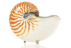 "One Kings Lane - Seaside Glamour - 10"" Giant Nautilus Shell w/ Sterling"