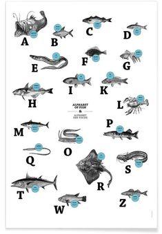 alphabet of fish, animal ABC as Premium Poster   JUNIQE