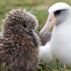 World's oldest wild bird hatches chick at age 62 : TreeHugger