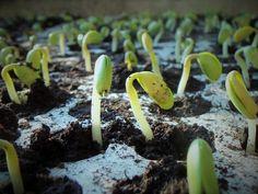8 problemas muy comunes en tu semillero