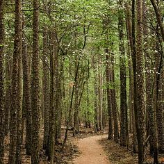 The 5 Best Vacation Spots for Hiking: Whispering Pines Trail, Hawn State Park, Missouri - Health Magazine